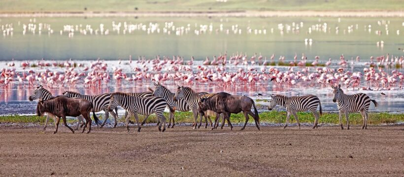 destination-lake-manyara