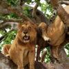 queen-elizabeth-lions