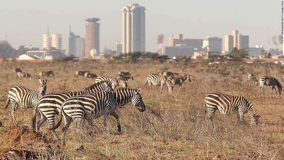 zebras-at-nairobi-national-park