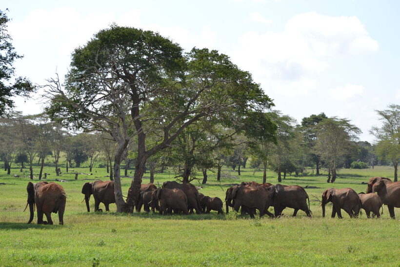 elephants at taita hills