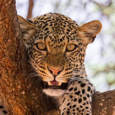 Multi- destination safaris